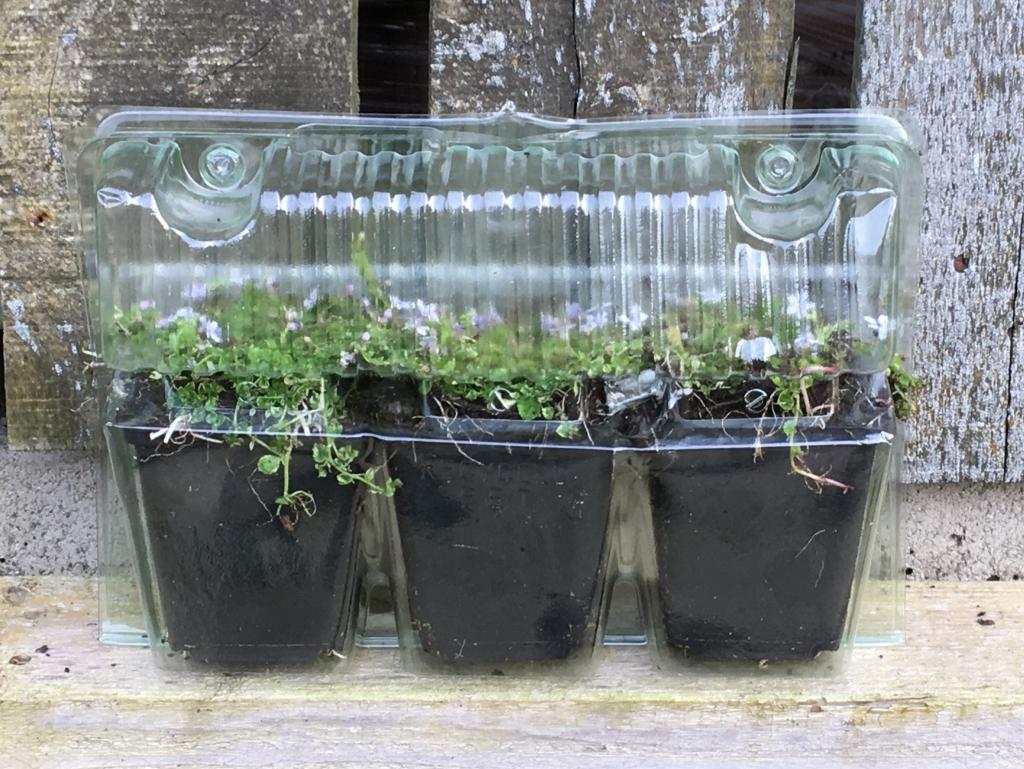 Mailor Darwin Plants