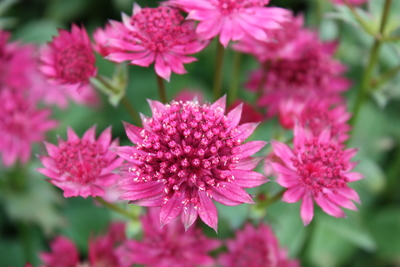 Pink Joyce